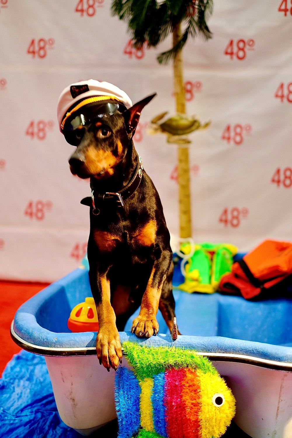 Doberman, Ric with life ring at photo shoot, in small dingy