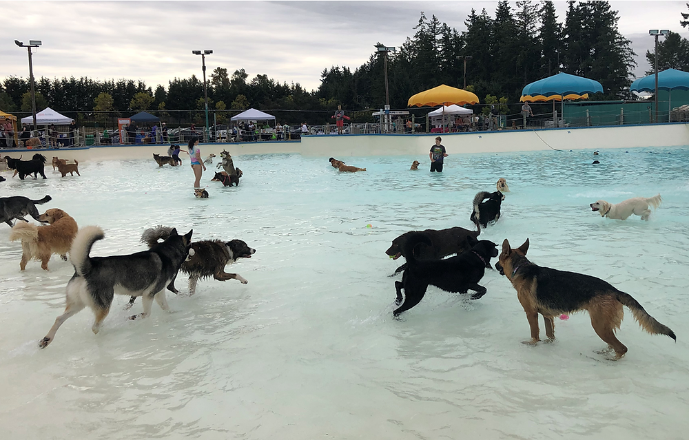 dozens of dogs at Wild Waves