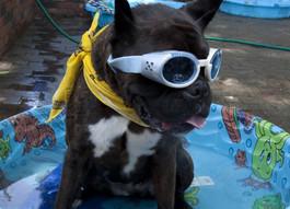 Dog Days and Dog Stars