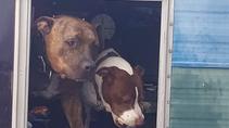 SPOTLIGHT! Seattle Dogs Homeless Program