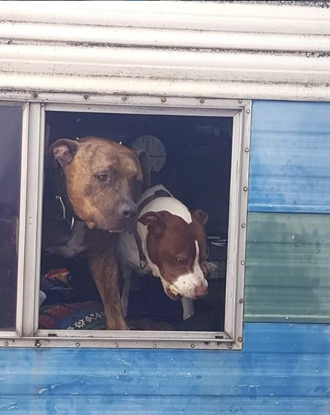 2 pups in window of RV