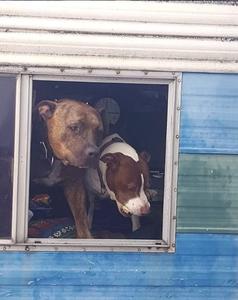 2 pups in window of RV