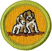 boyscout merit badge.jpg