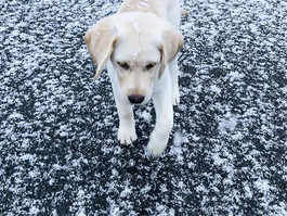 SNOW DOG DAYS! Tips to Keep Your Pup Warm this Winter
