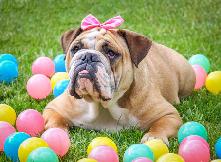 Easter Dogs!  EASTER events for Pups!