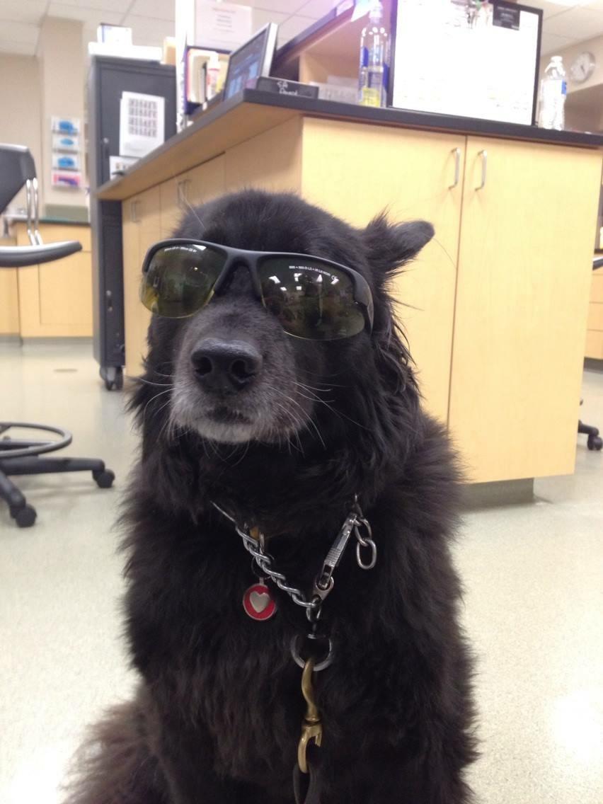 Louie -black dog in sunglasses at vet office