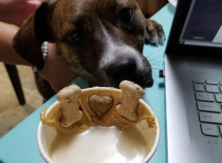 GOT DOG? NEED COFFEE? We found the SPOT!