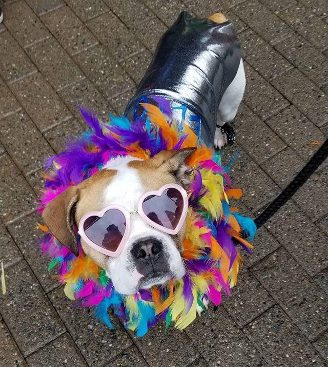 Dog dressed like Elton John with Sunglasses