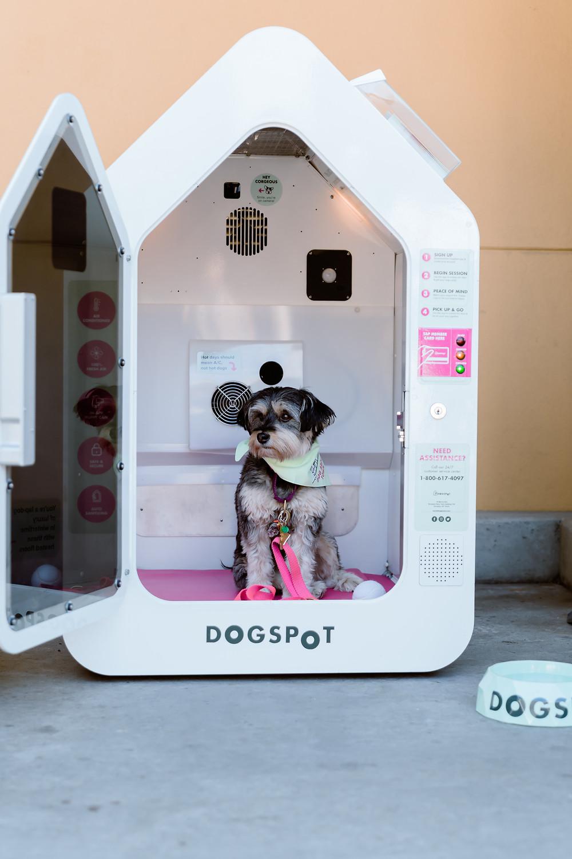 Terrier mix inside DOGSPOT house