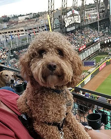 Bark! In the Park at Safeco Field! Woof!