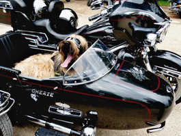 Woof! Who Let the Dogs OUT? Weekend Events