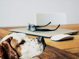Seattle Pup Magazine Announces Writers' Workshop