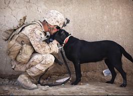 War Dogs: Canine Veterans Book List