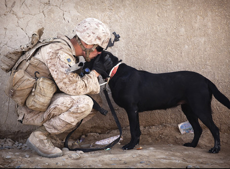 War Dogs: Canine Veterans Book List