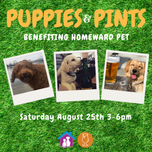 Puppies and Pints Poster Pics of pups with beer