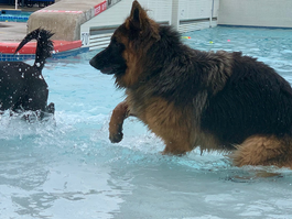 "Attention WATER DOGS! Small and Big Dogs Welcome at ""Paws in the Pool"" Edmonds, WA"