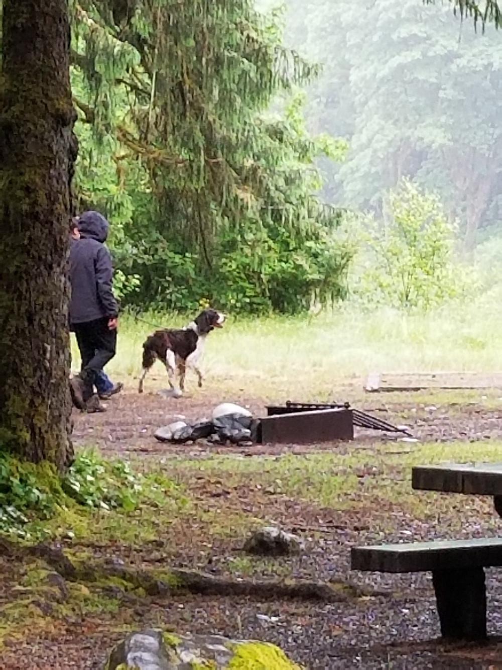 Dog in Campround
