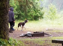 Dog-Friendly Camping in Washington: Top Three Favorites