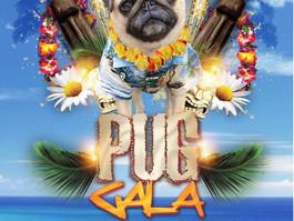 Pug Gala! We Love PUGS! June 9, 2018