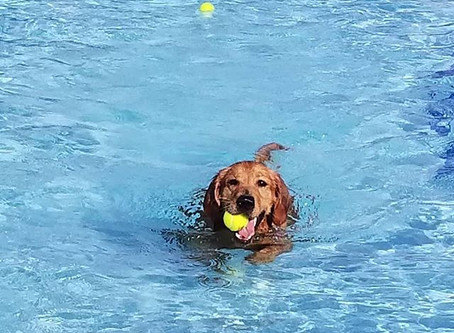 Pooch Plunge a SPLASH! We love Water & DOGS!