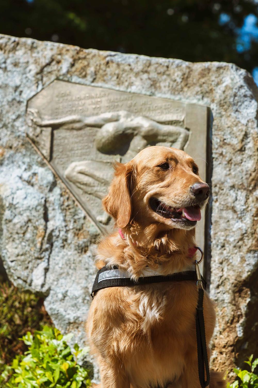 Golden Retriever in front of UW war memorial