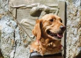 Dogs Make the Difference: Service Dogs & Student Veterans