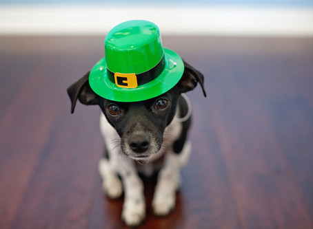 St. Patrick's Pups
