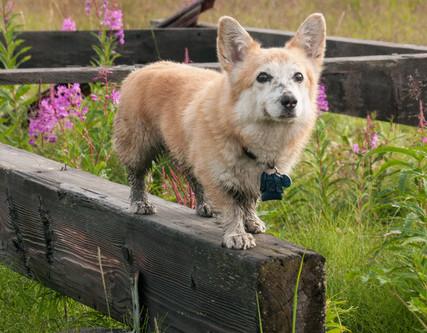 Seattle Pup SPOTlight: Sweet Boy Troy!