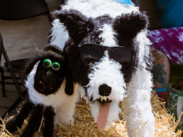 Save the Date for the Spectacular Sheep Dog Classic (June 11-14, 2020)