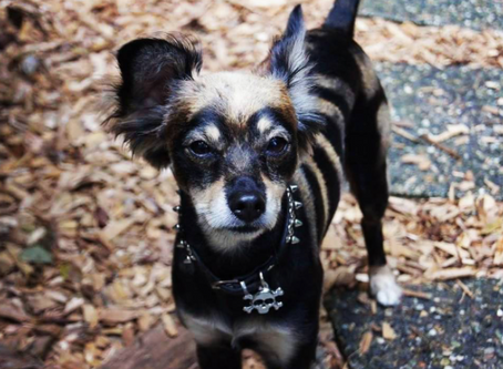 Local Celebrity Grimm! Seattle Pup Halloween Spotlight