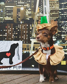We 💗 this pup A LATTE!  Fantastic Miste