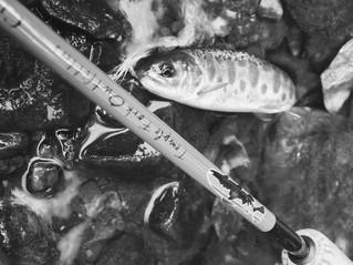 07.07 SUP+fishing 延期のお知らせ