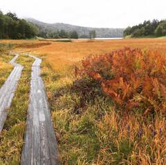 《山企画》紅葉の尾瀬沼ハイキング