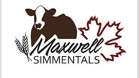 Maxwell Simmentals Logo.jpg