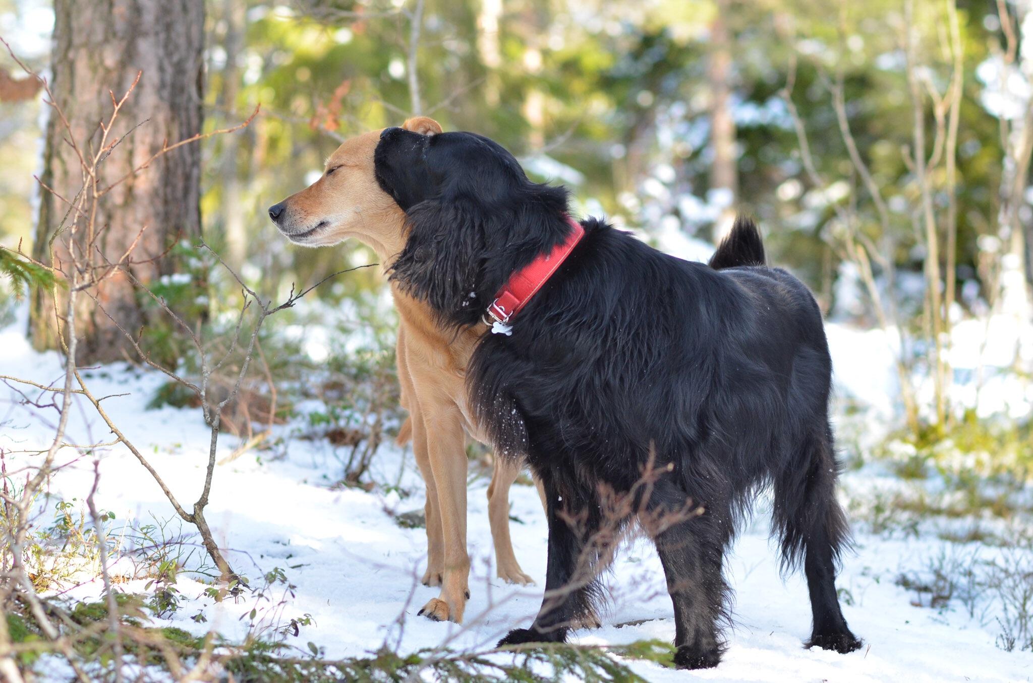Oslo Hundelufting