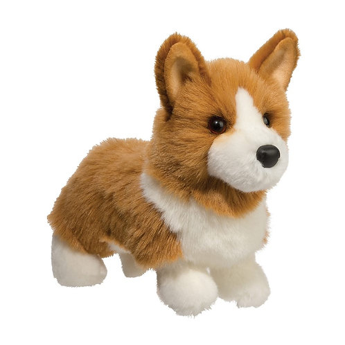 Douglas - Louie Corgi Dog