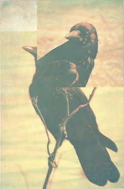 """Sarjasta / From series """"Birds"""""""