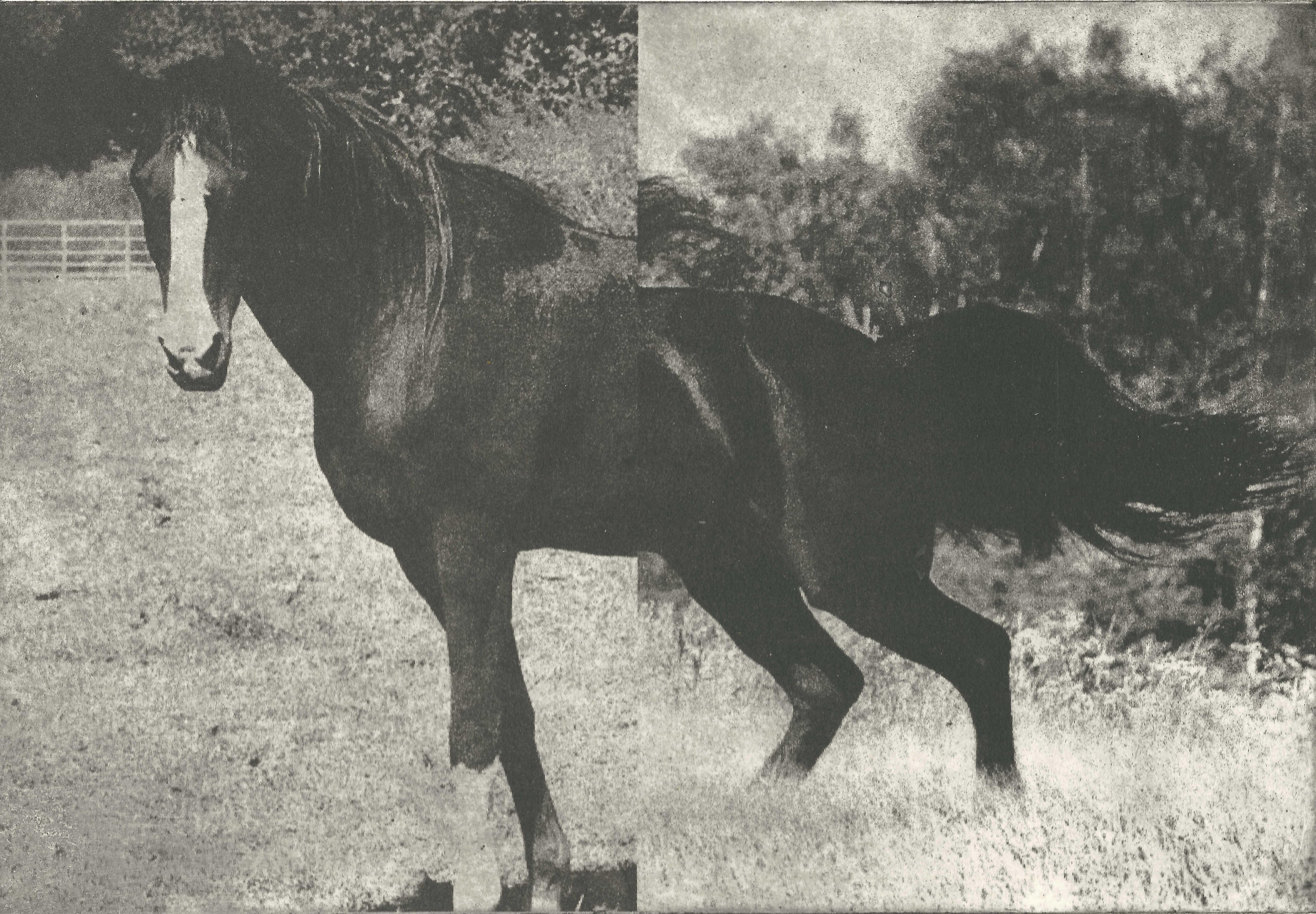 Hevonen VII