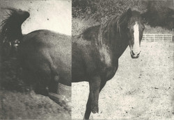 Hevonen I