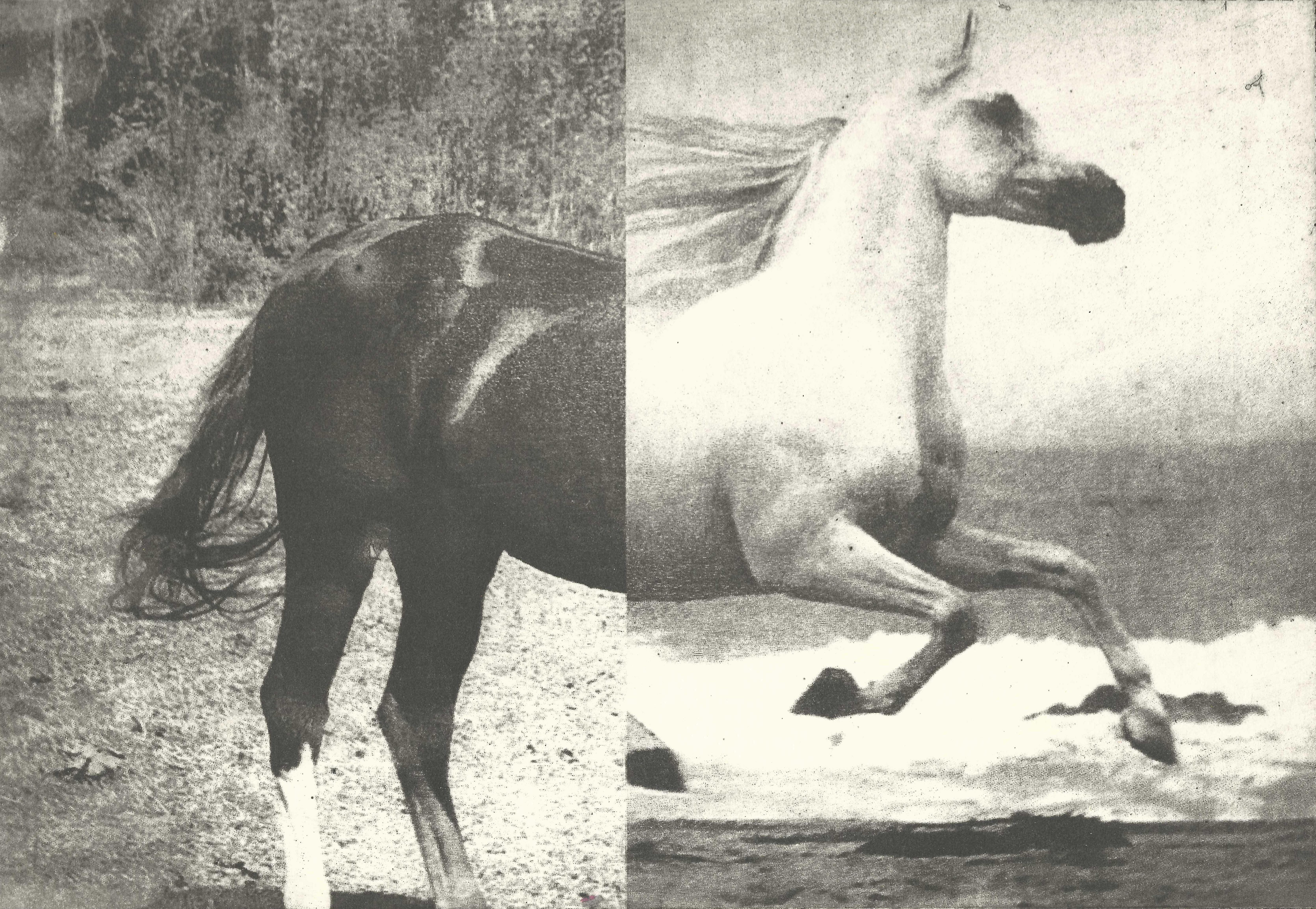 Hevonen V