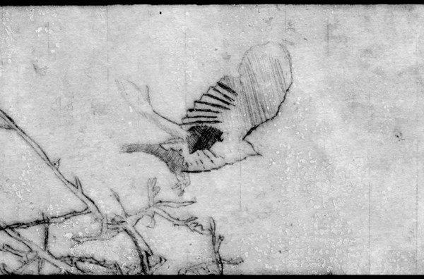 Lintu / Bird