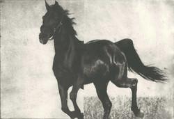 Hevonen III