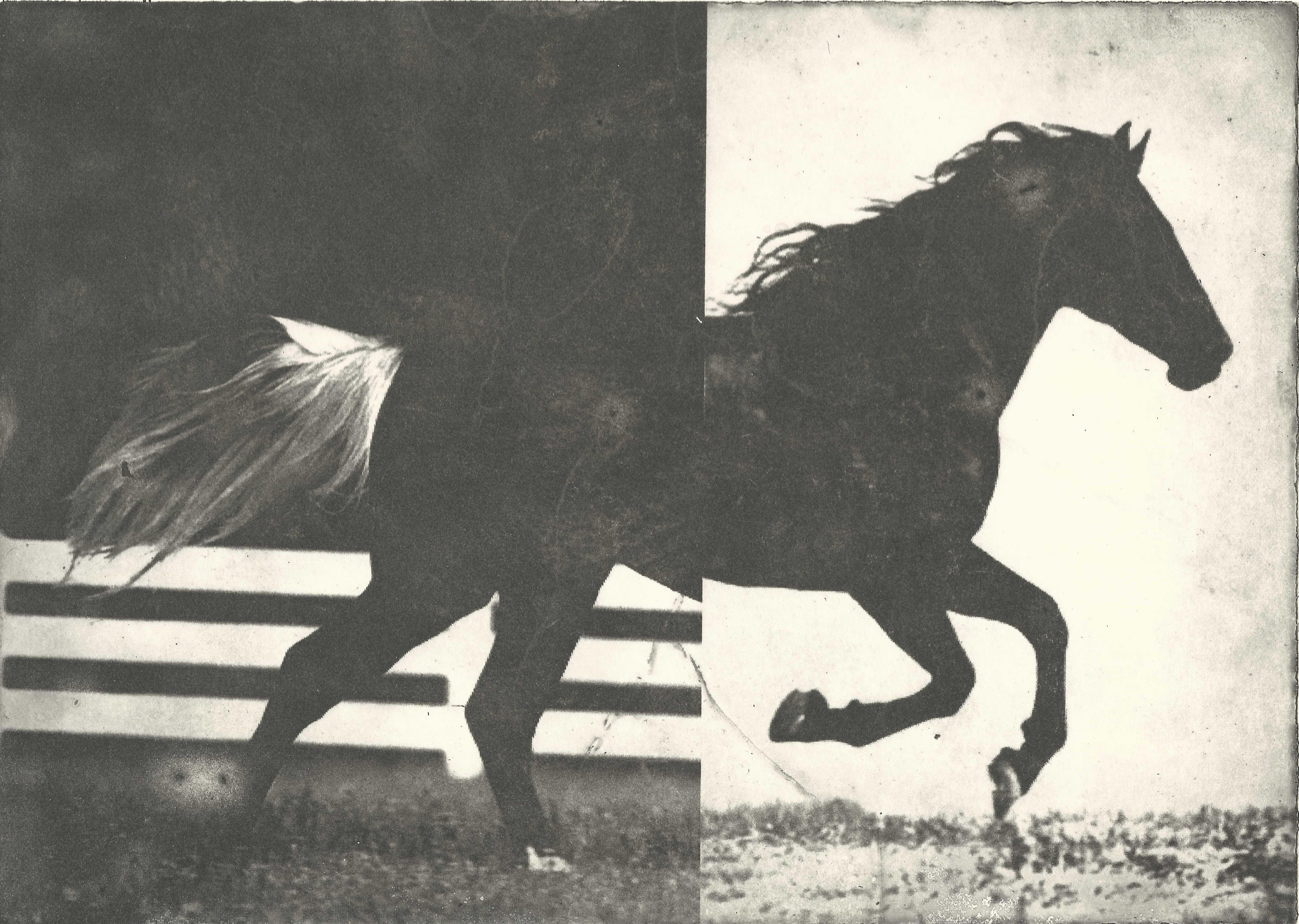 Hevonen VIII