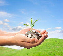 finance tree growth.jpg