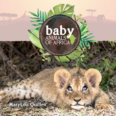 Baby Animals of Africa