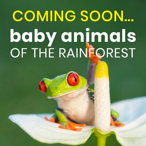 Baby Animals of the Rainforest