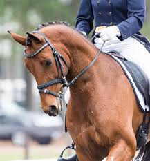 Dressage Horses Opt for Lower Rein Tension