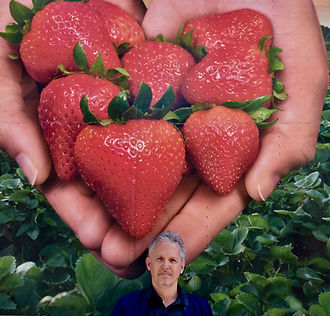 K 6.strawberry.jpg