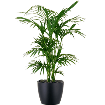 office-plant-png-3.png