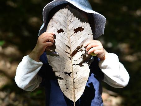 【木育インストラクター・保育ナチュラリスト養成講座 2021】開講日決定!